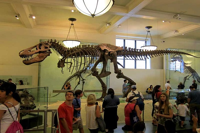Bạn có thể nhìn thấy được những bộ xương khủng long khổng lồ trong bảo tàng này