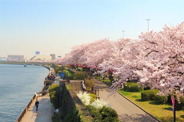 Nhật Bản là một trong những điểm khai thác có hạng ghế business