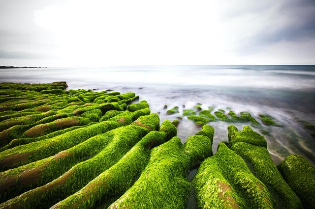 Những rạn san hô của Laomei được phủ thêm màu xanh mát mắt của tảo biển vào những ngày đầu mùa hè